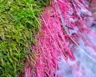 Kai Staats - Green & Pink