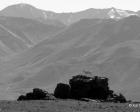 Kai Staats - Alaska, 1990: Dall Sheep on Rock