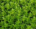 Kai Staats - Alaska, 2005: Sea Weed