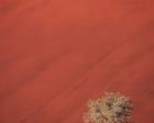 Kai Staats - Namibia Dune & Tree