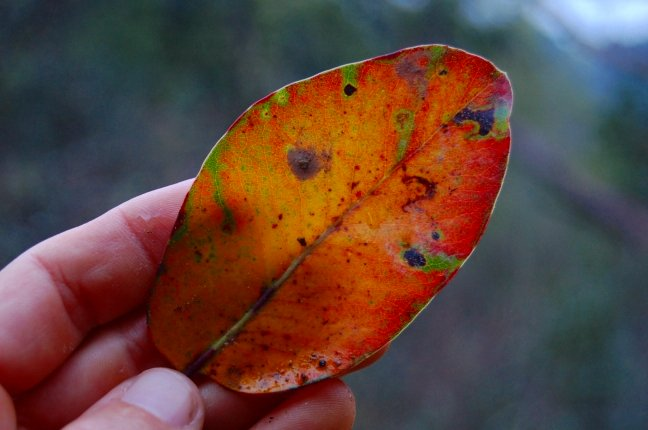 leaf essay Essay on leaf by niggle leaf by niggle by jrr tolkien is a complex story that uses many symbols to emphasize the theme of life and death at the beginning of the story it seems to just be about a man, who is going on a long journey, but.