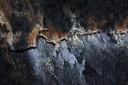 Kai Staats - Lava Flow, Big Island, Hawaii: Sulfur Stain