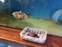Kai Staats: turtle rescue