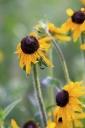 Kai Staats: Buffalo Peak Ranch, flower