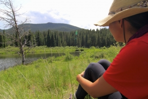 Kai Staats: Wigwam Wilderness, moose
