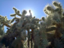 Cholla Forest, Superstitions, by Kai Staats